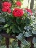 My Secret Winter Garden